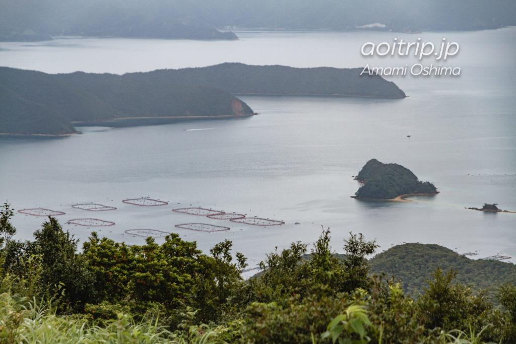大島海峡 完全養殖マグロの生簀
