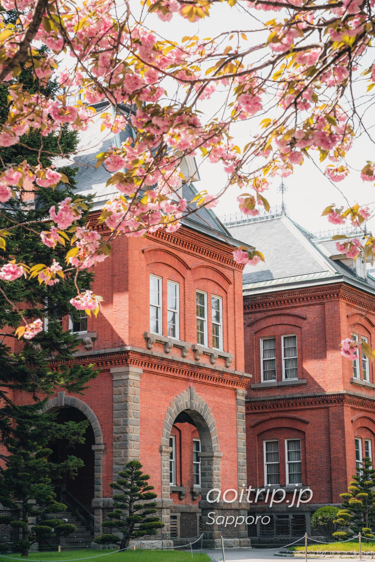 北海道庁赤れんが庁舎とヤエザクラ(サトザクラ)