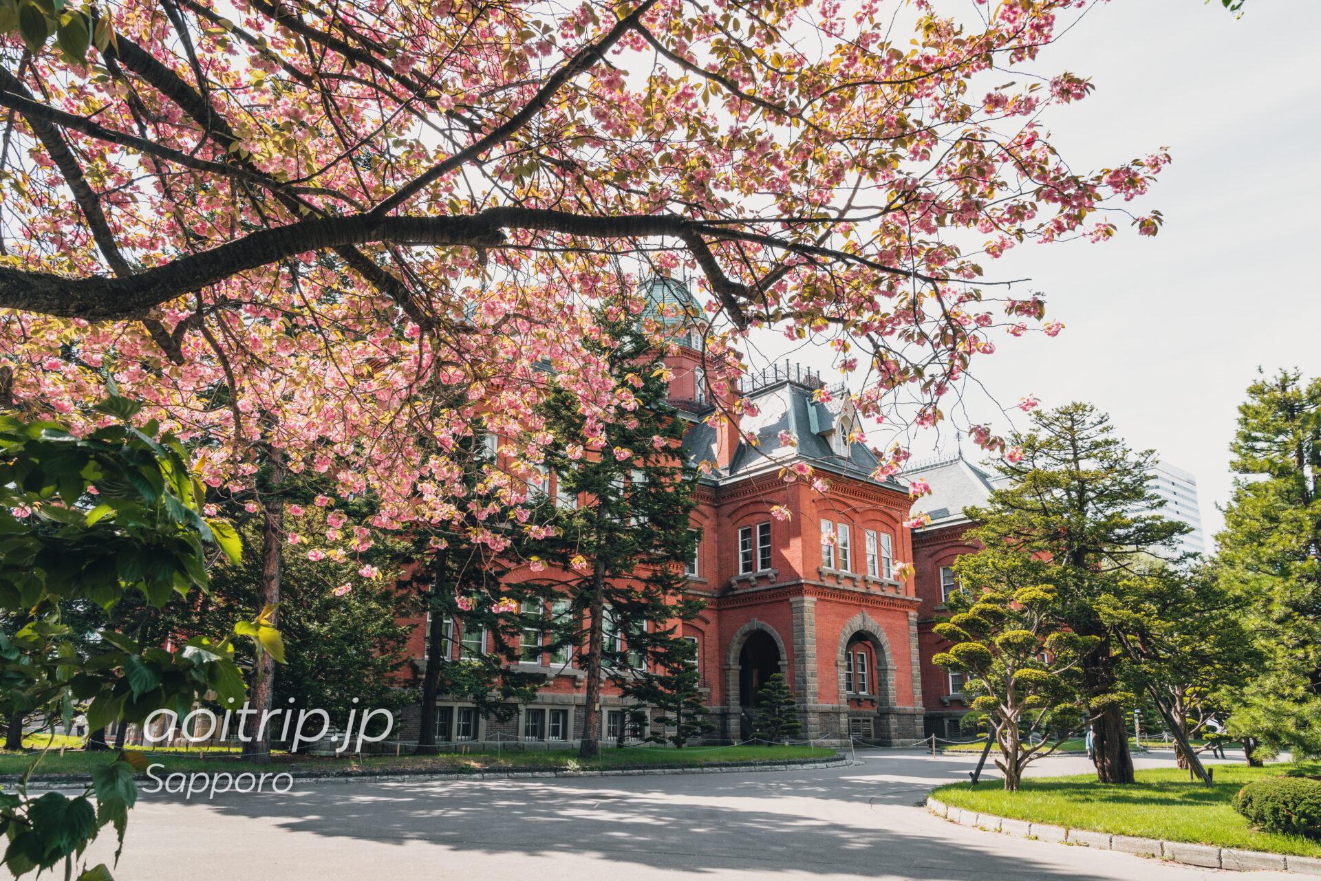 北海道庁赤れんが庁舎と前庭のヤエザクラ(サトザクラ)