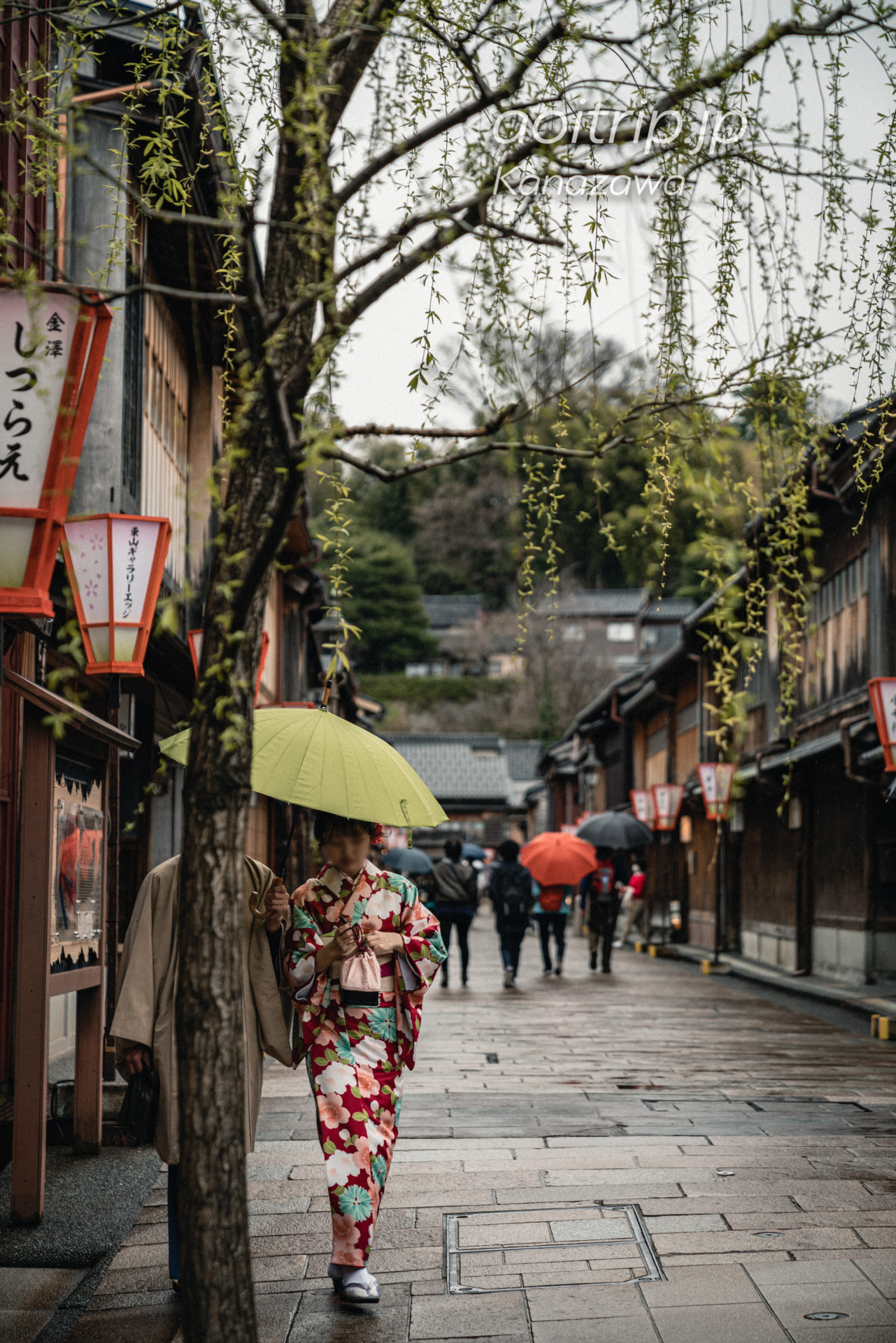 金沢 東茶屋街 二番通りの柳