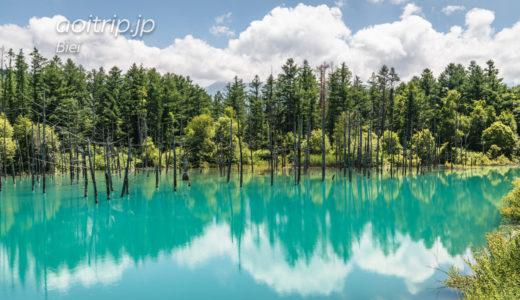 美瑛の白金 青い池|Shirogane Blue Pond, Biei