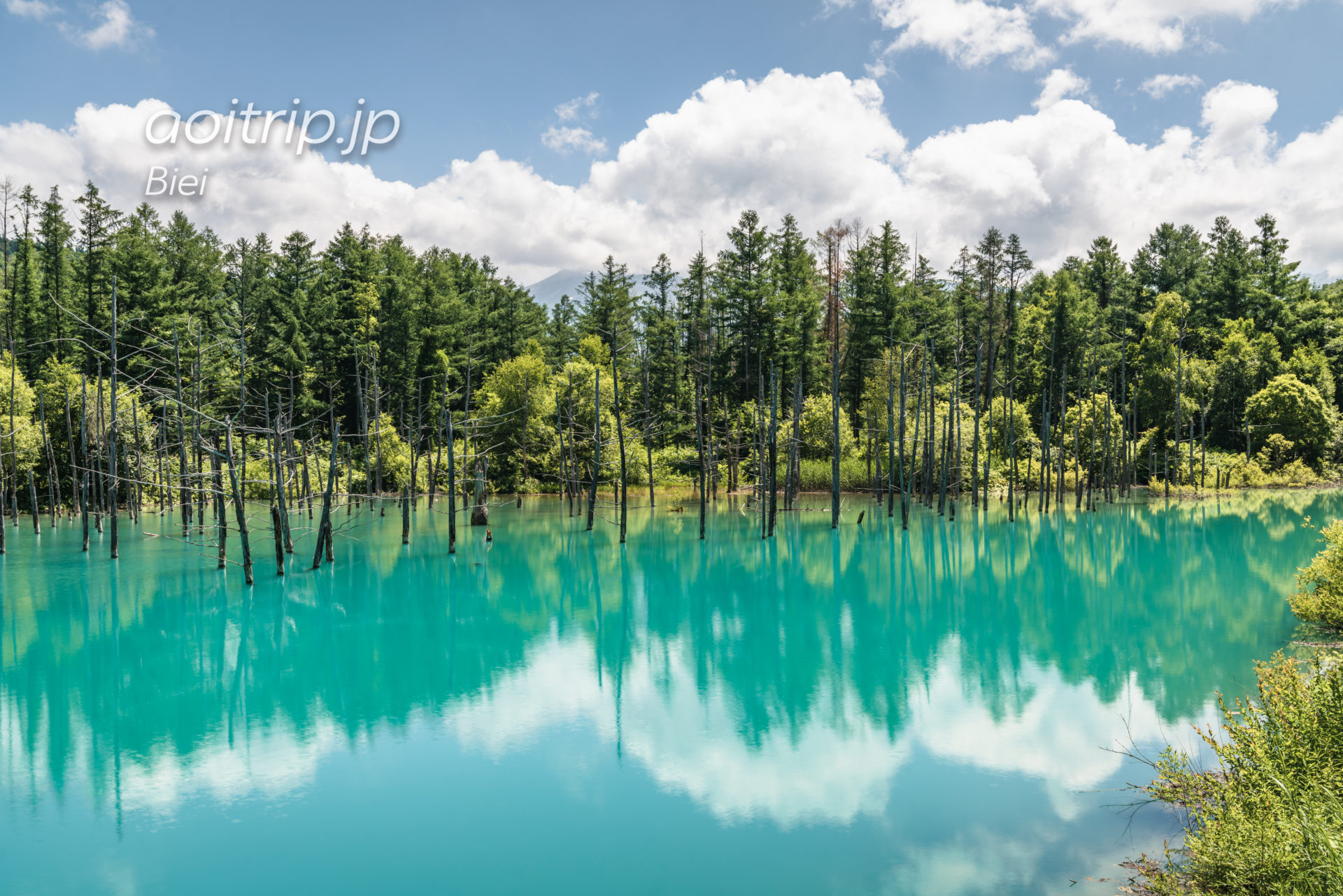 美瑛の白金 青い池 Shirogane Blue Pond, Biei