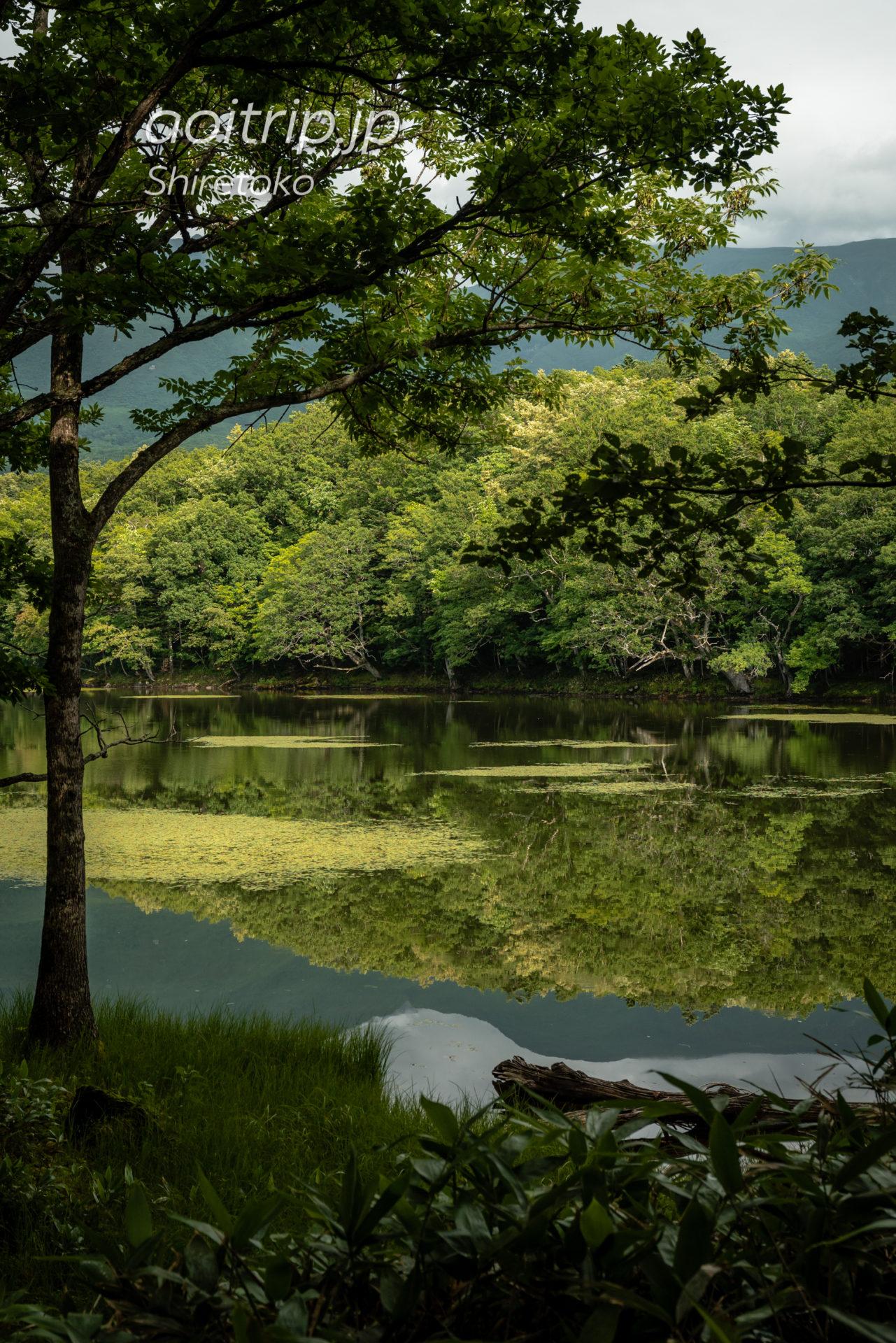 知床五湖 Shiretoko Goko Lakes