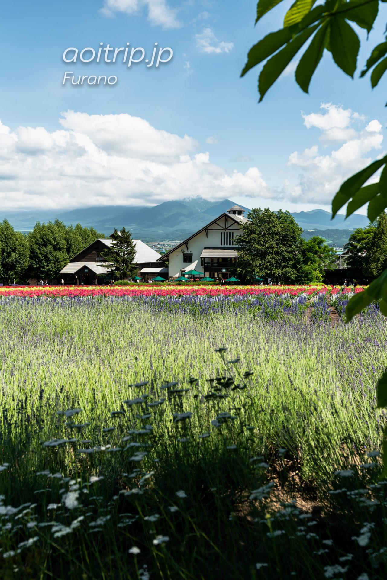 ファーム富田ラベンダー畑 Farm Tomita 花人ガーデン