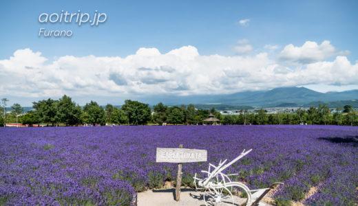 中富良野 ファーム富田のラベンダー畑|Farm Tomita, Nakafurano