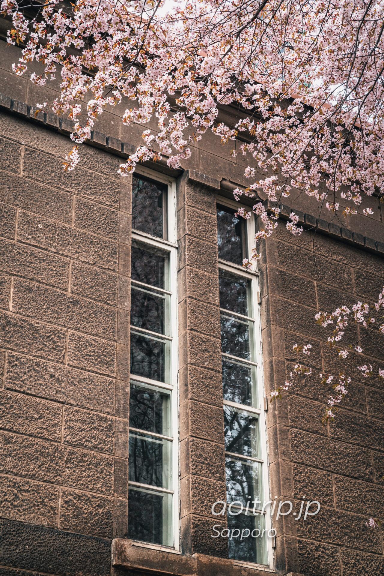 札幌市資料館(旧札幌控訴院)前のエゾヤマザクラ