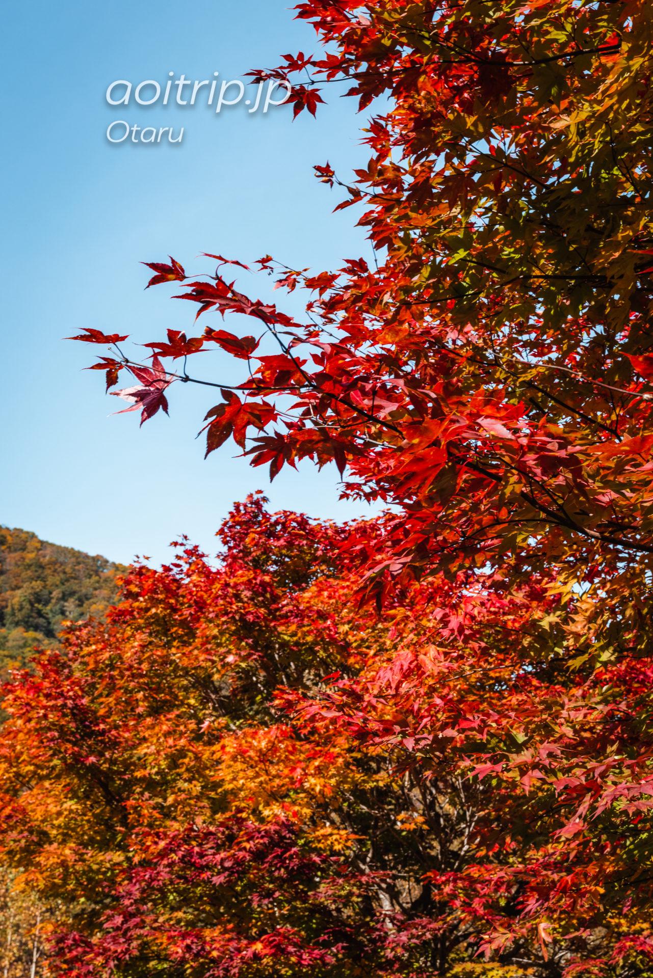 朝里ダムの紅葉