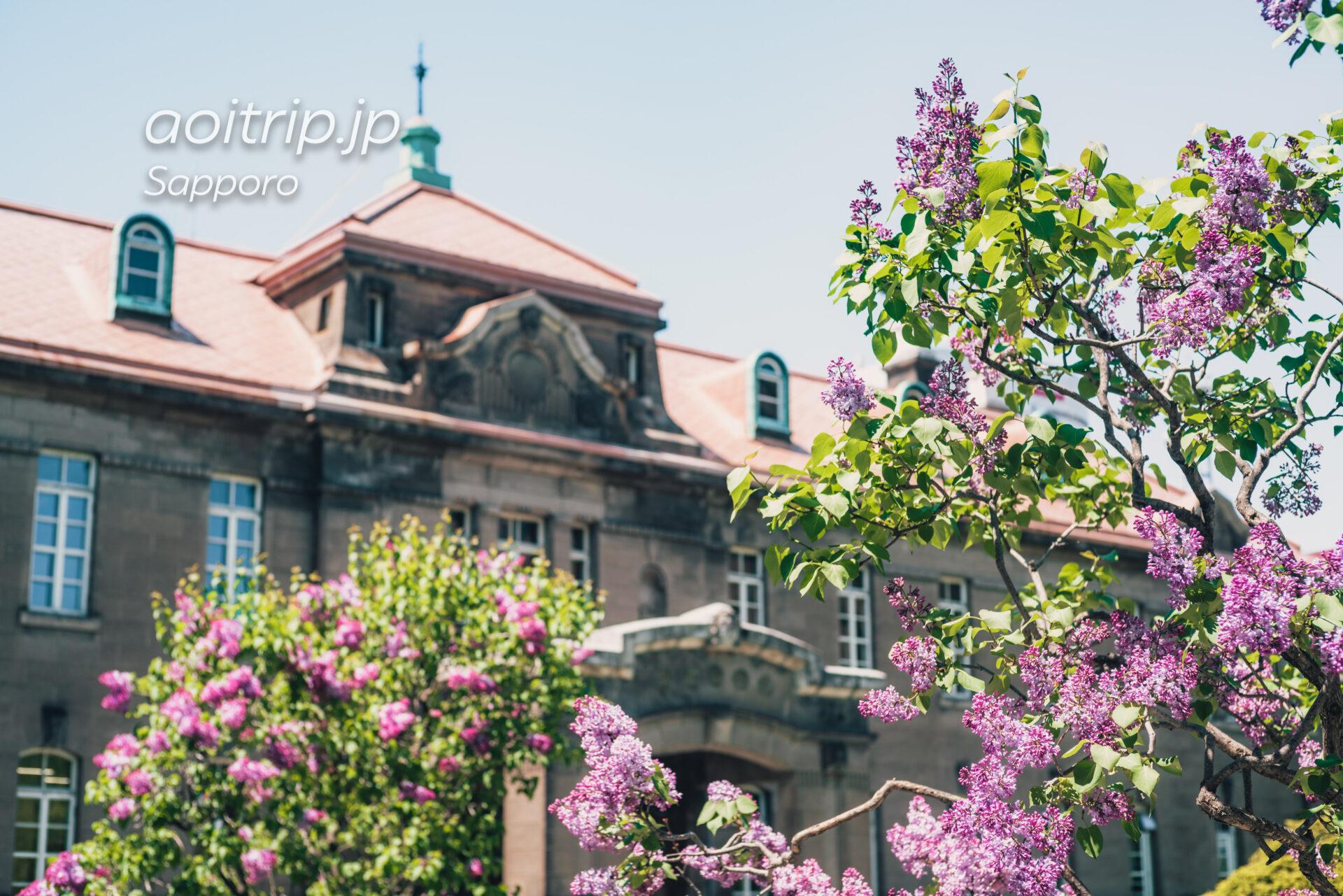 札幌市資料館(旧札幌控訴院)前のライラック