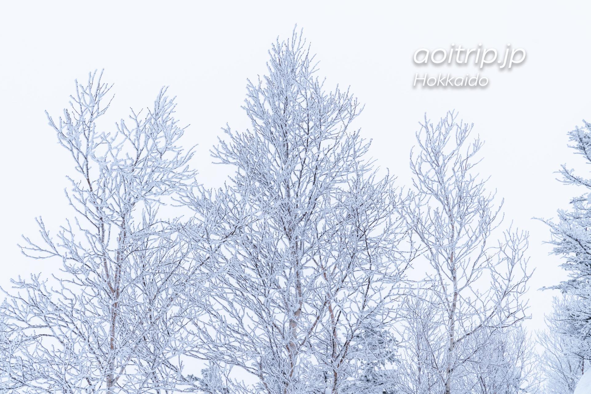 霧氷テラスの霧氷