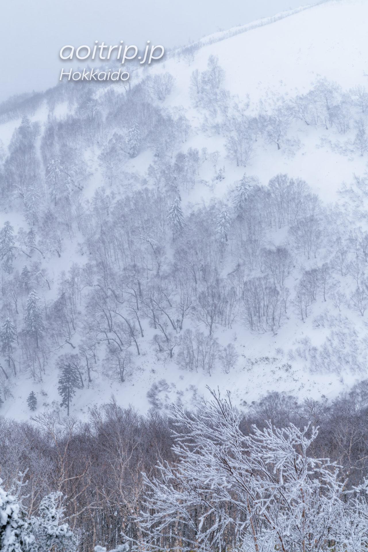 霧氷テラスのクラウドウォーク