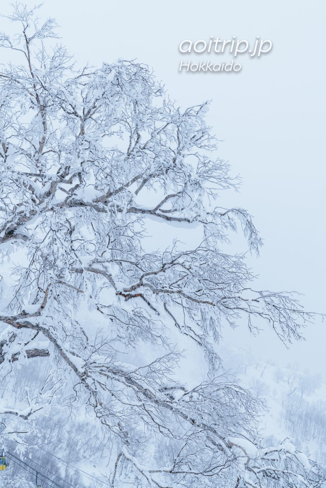 霧氷テラス Terrace of Frost Terrace