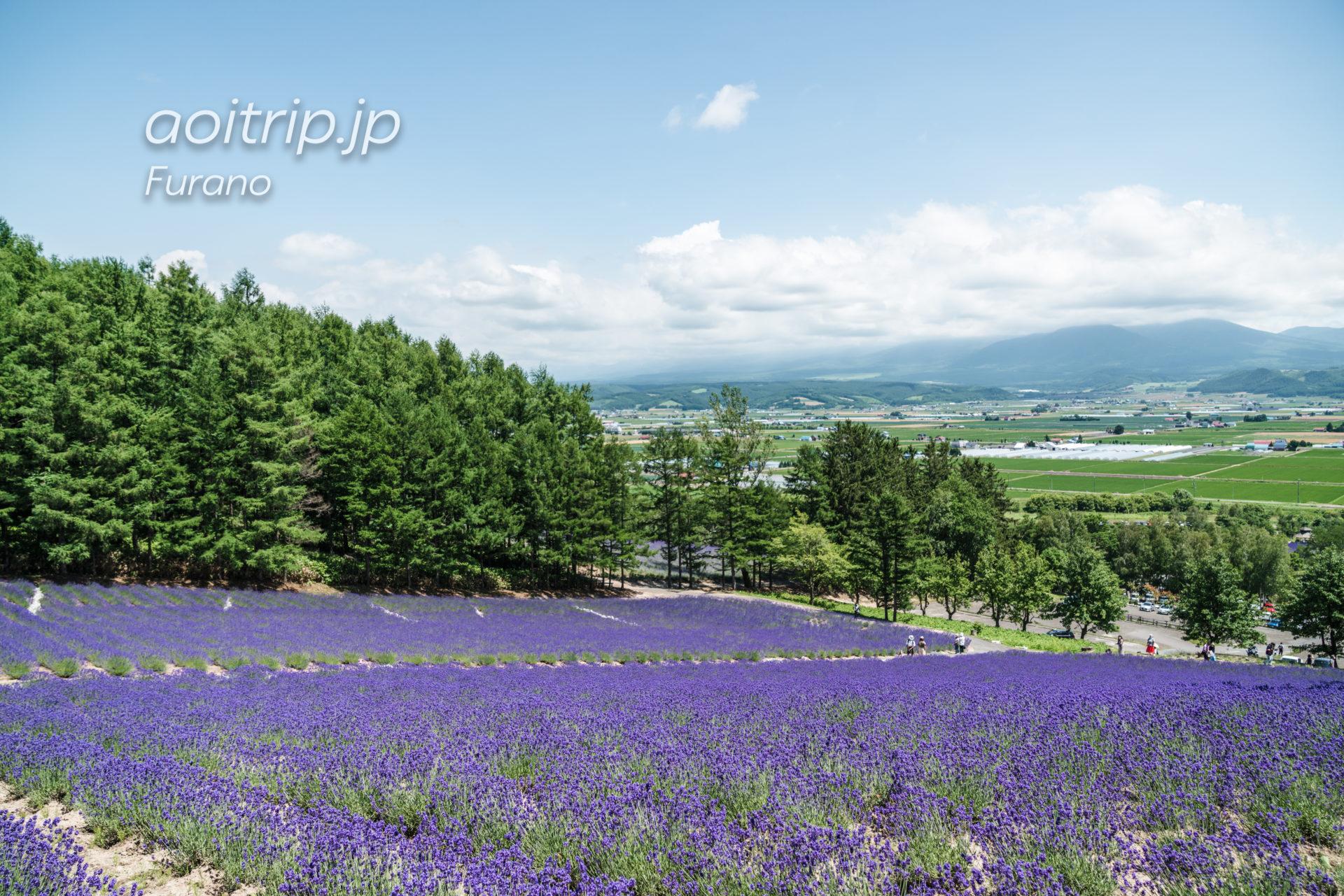 森のラベンダー畑 Lavender Forest Field