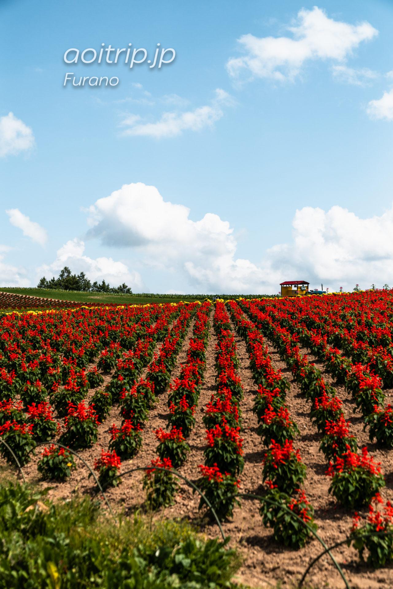 上富良野の農園かんのファーム Kanno Farm, Kamifurano, Hokkaido
