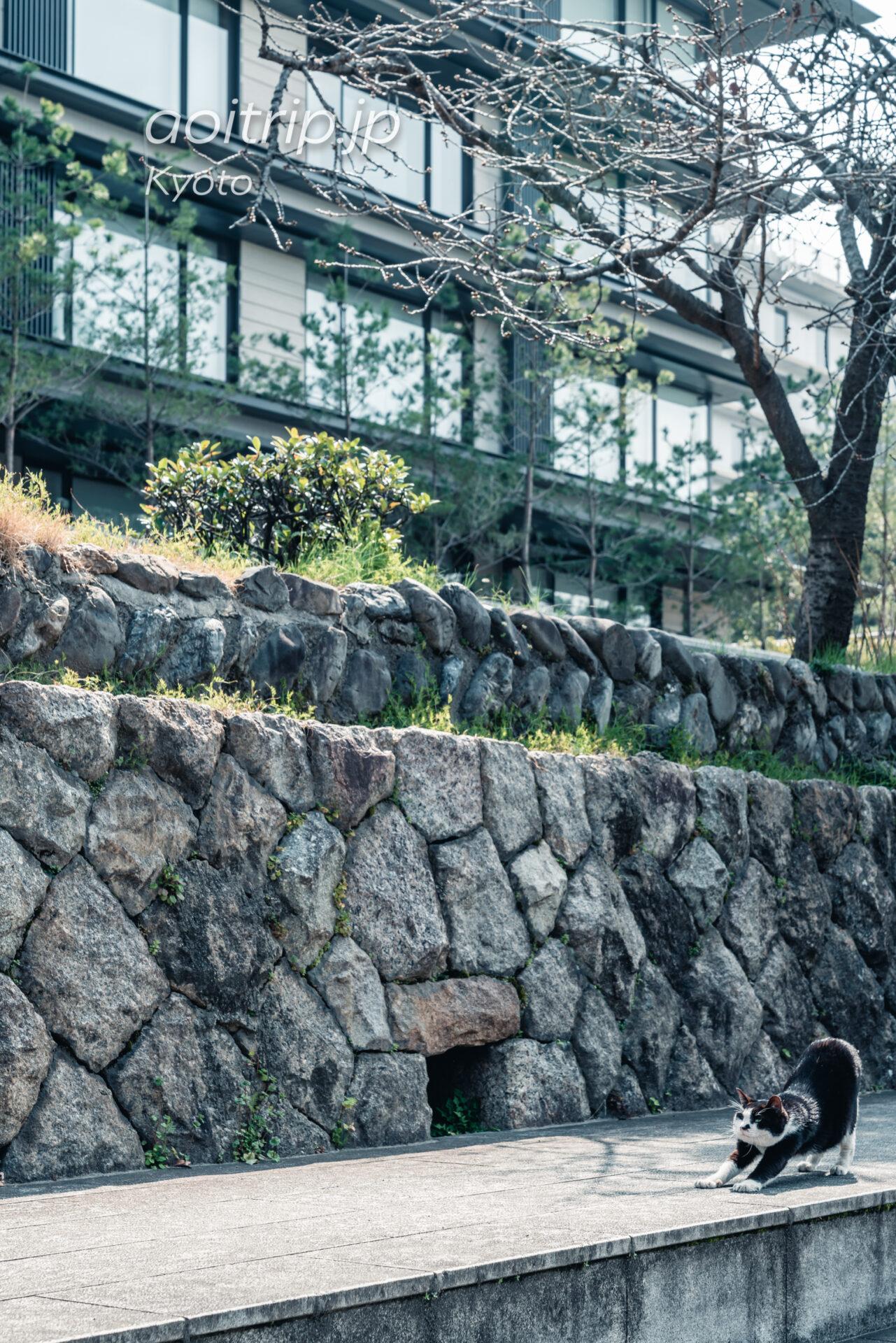 二条城の石垣とホテルザミツイ京都と猫のクロちゃん