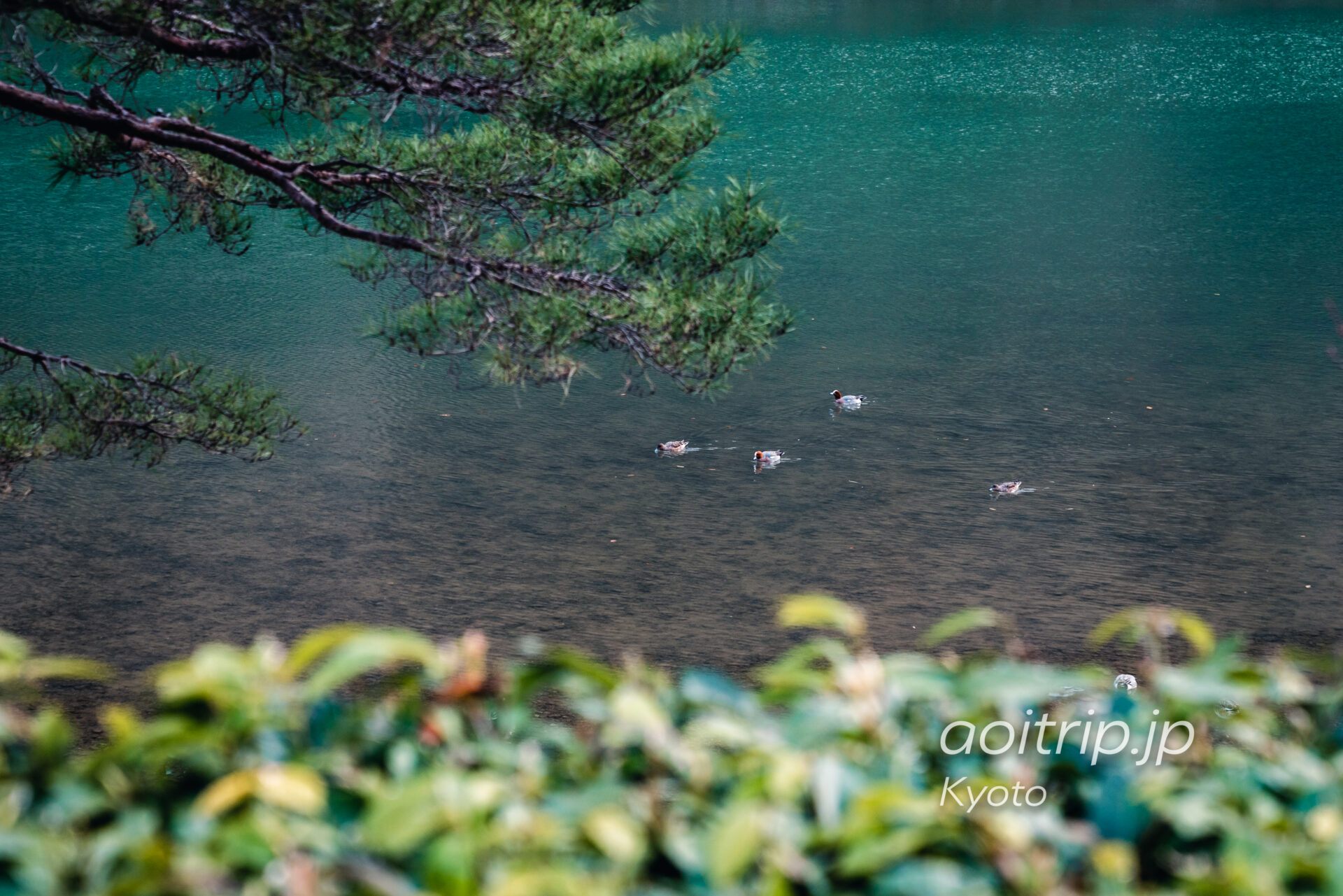 京都嵐山 保津川