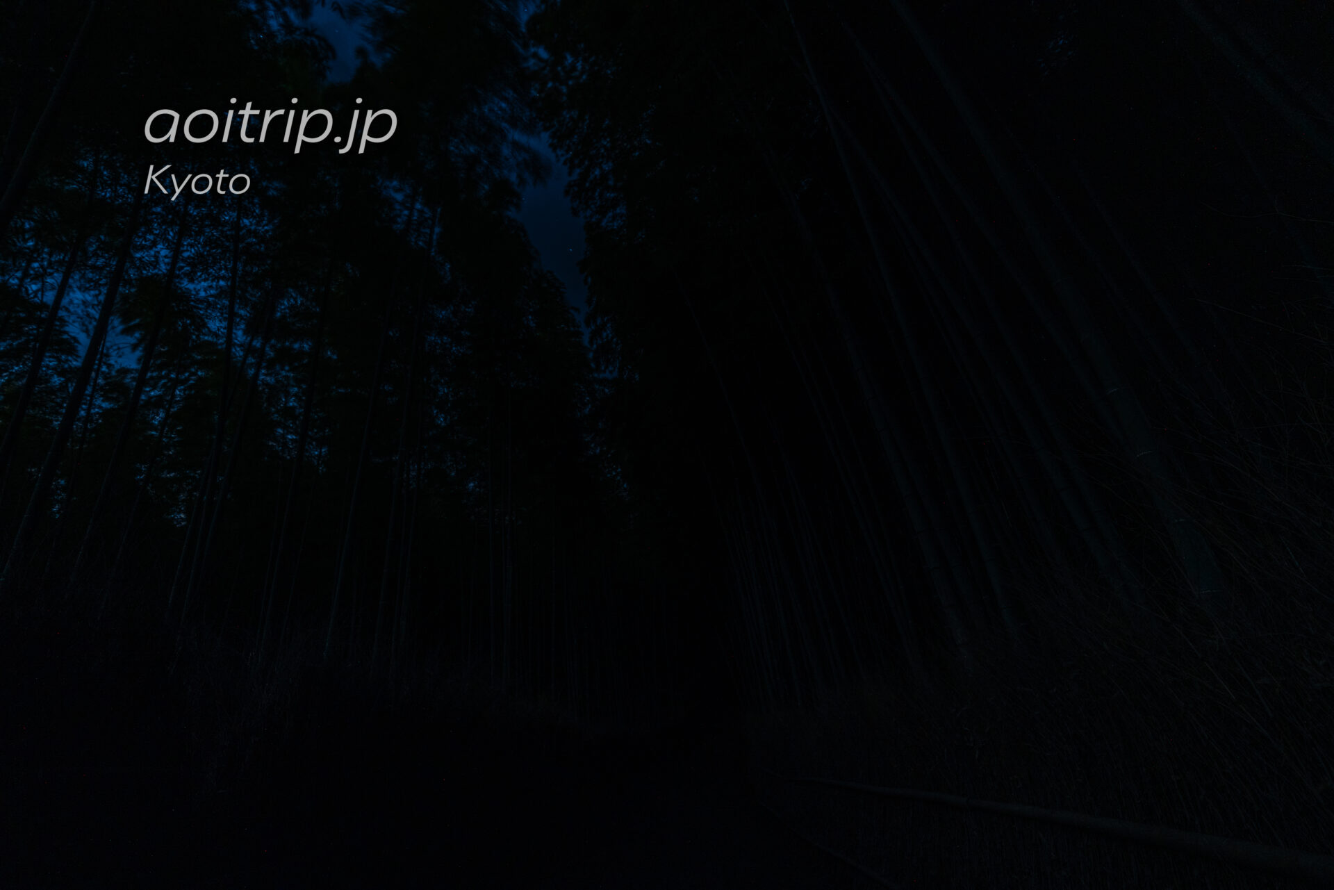 京都嵐山 竹林の小径 夜