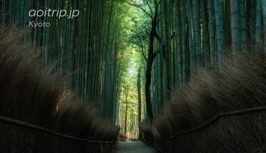 京都嵐山 竹林の小径 源氏物語に登場する神社の先に…。