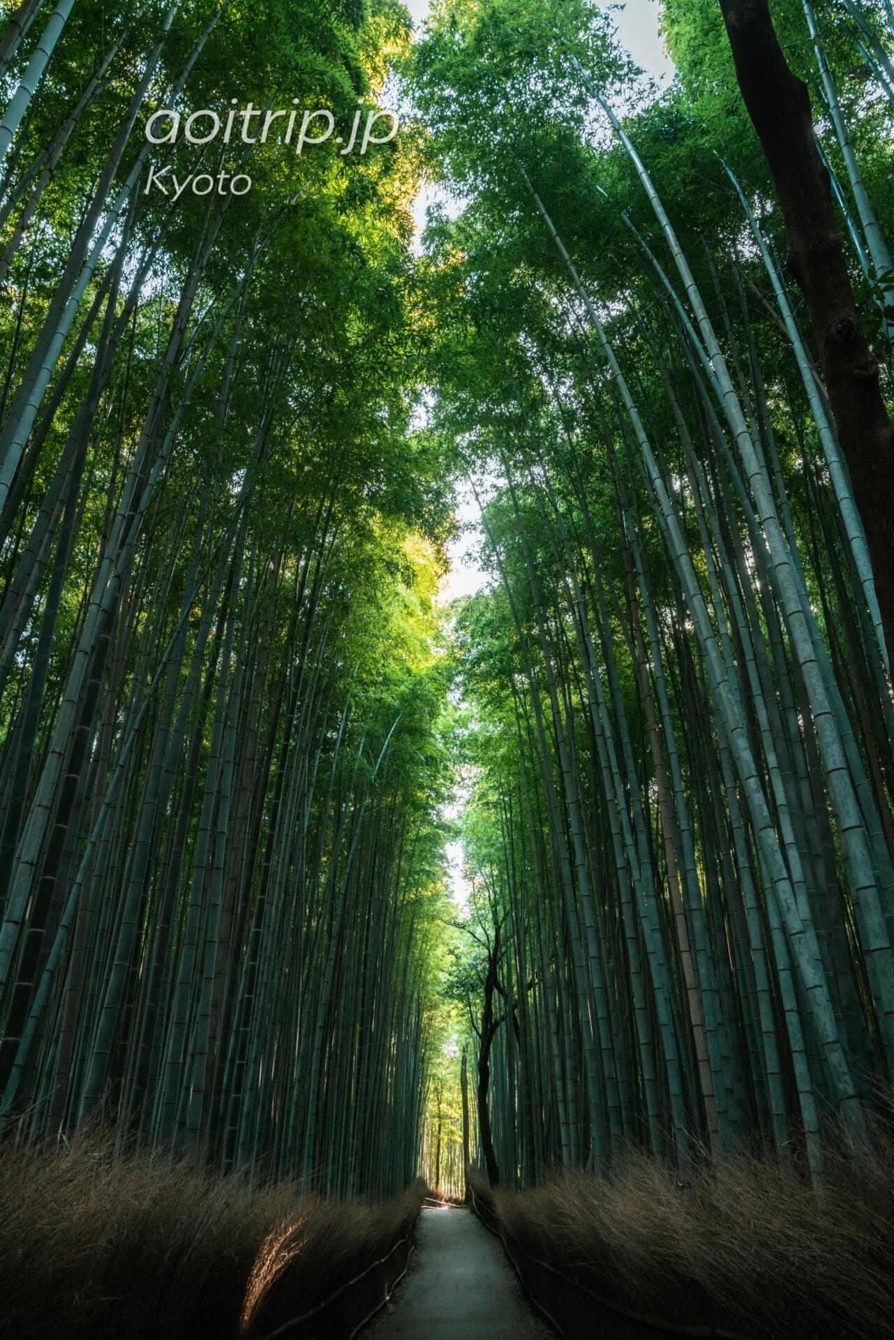 京都嵐山 竹林の小径 Arashiyama Bamboo Grove