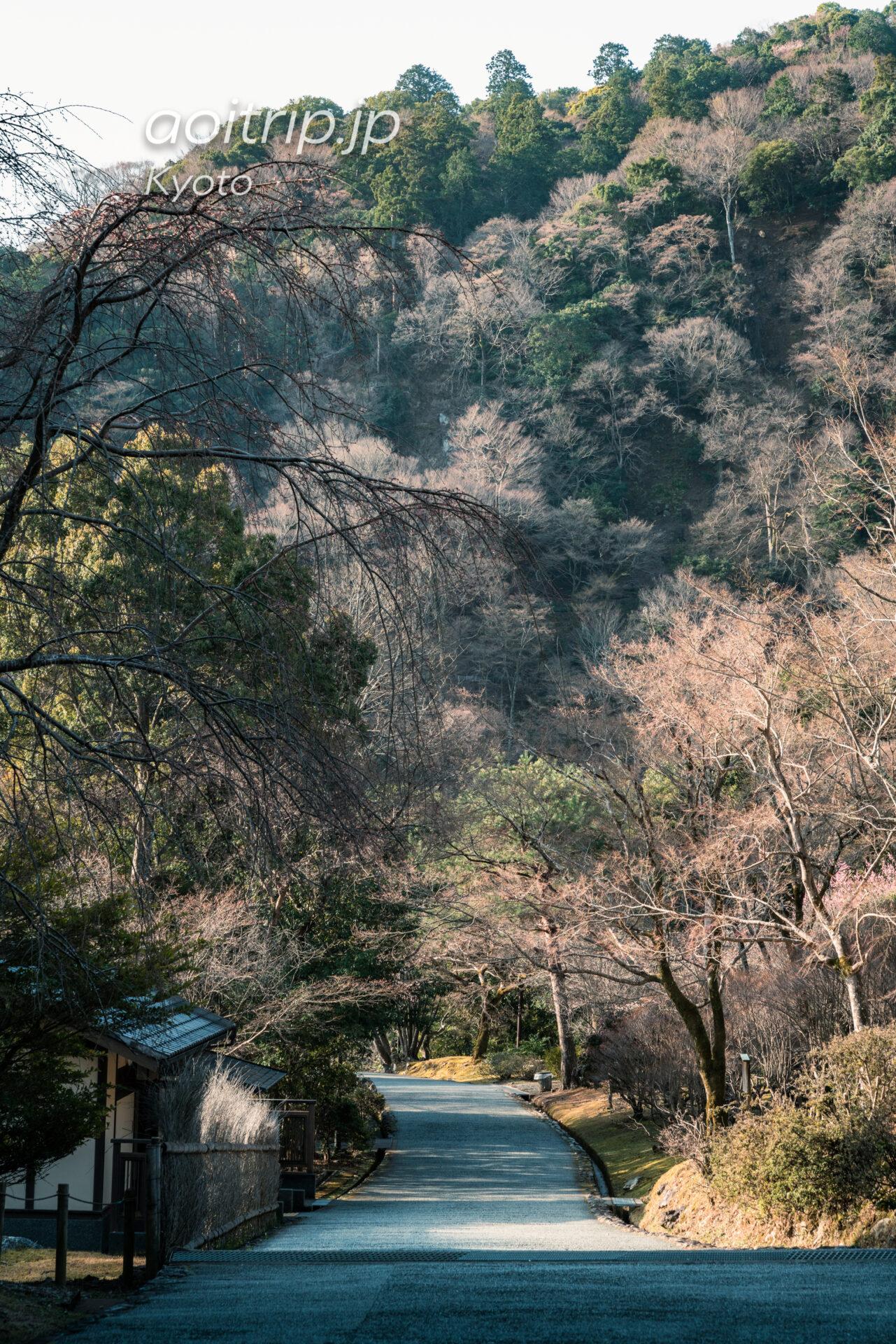 京都嵐山 亀山地区