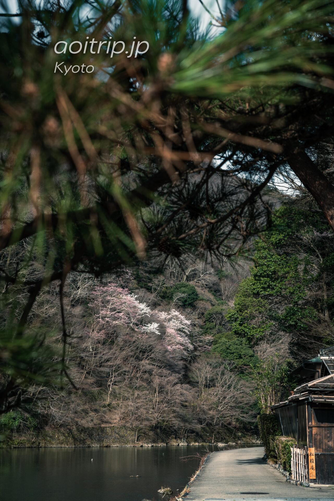 京都嵐山 嵐峡の桜