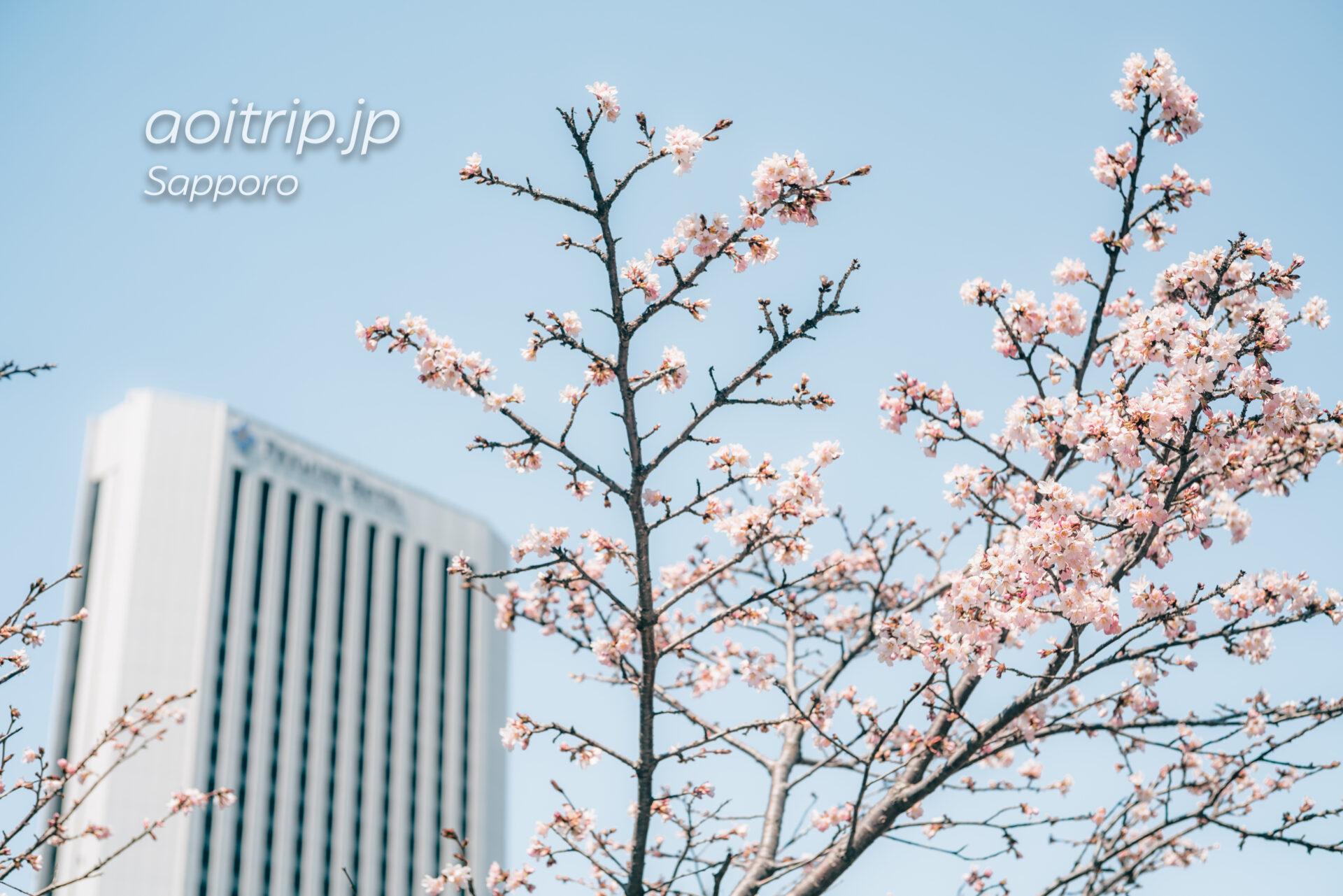 中島公園のチシマザクラとプレミアホテル札幌中島公園