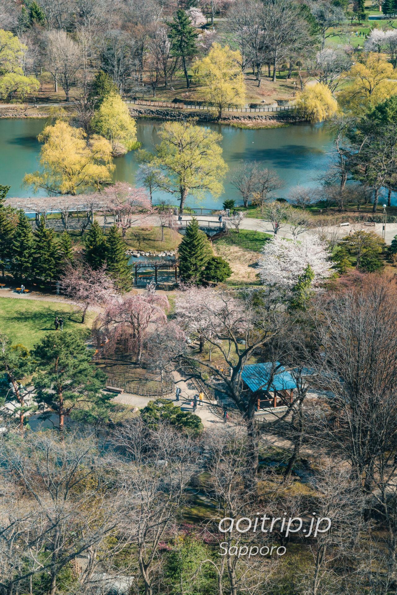 札幌中島公園の桜