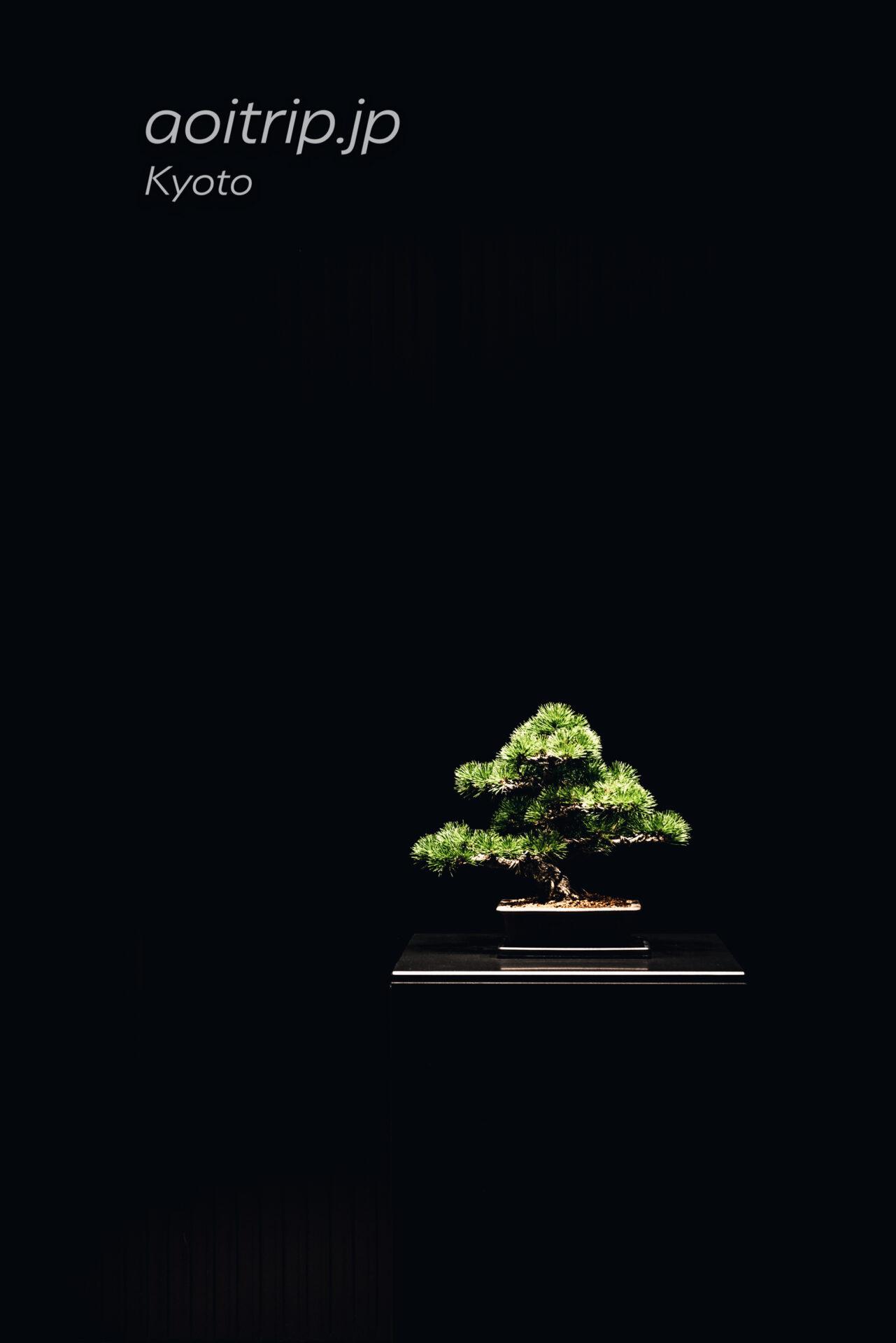 ザ リッツ カールトン京都 The Ritz-Carlton Kyoto クリスチャン トルチュ 竹中庭園緑化