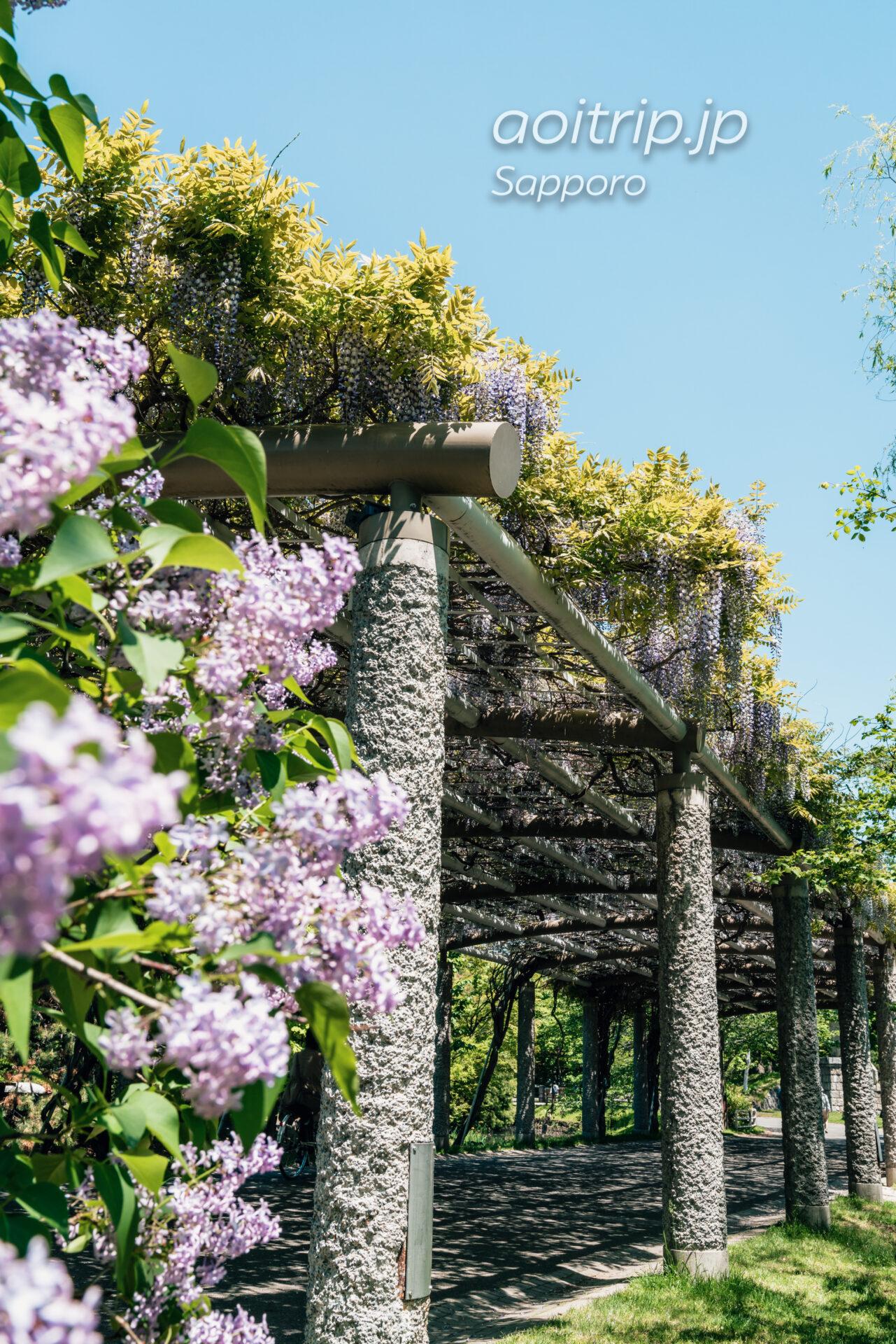 札幌中島公園の藤棚