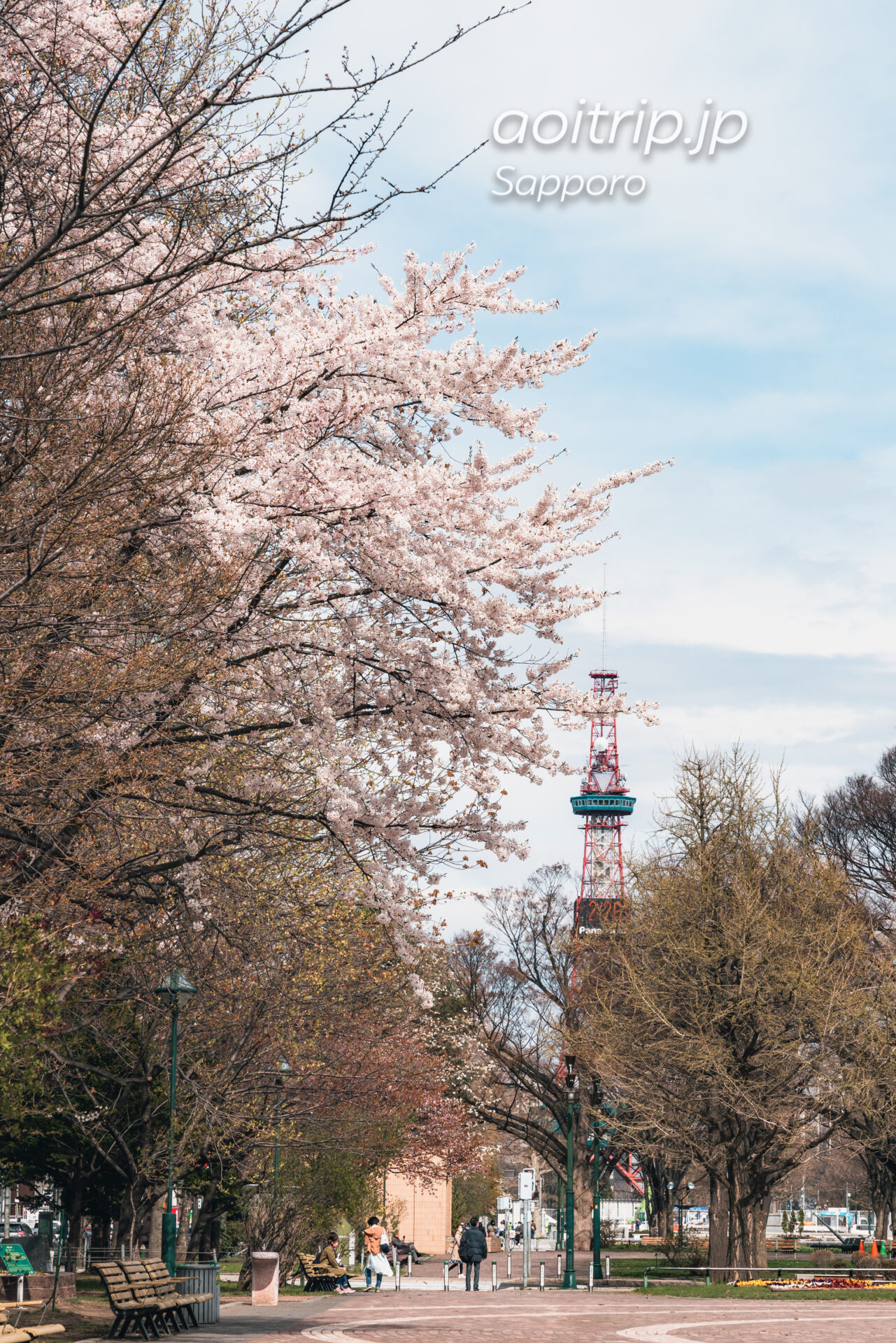 大通公園のソメイヨシノ