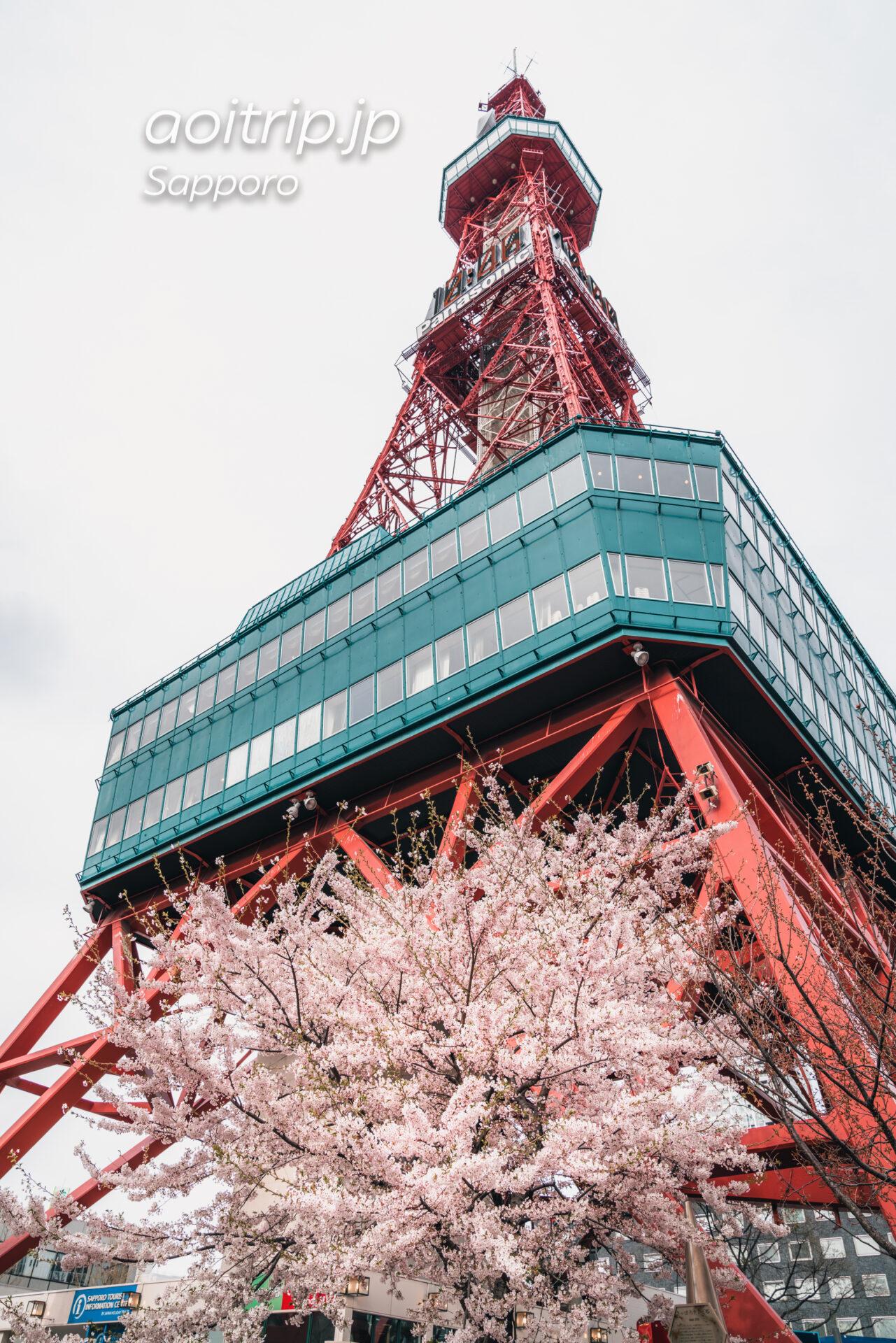 さっぽろテレビ塔前のソメイヨシノ