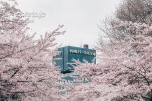 札幌パークホテルとソメイヨシノ並木