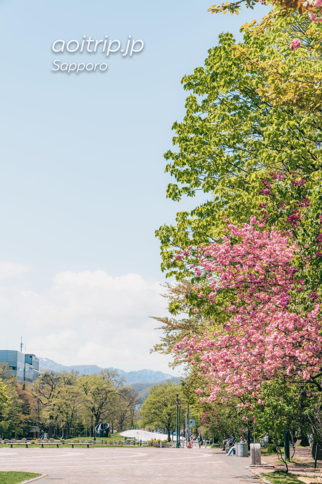札幌大通公園の八重桜(サトザクラ)