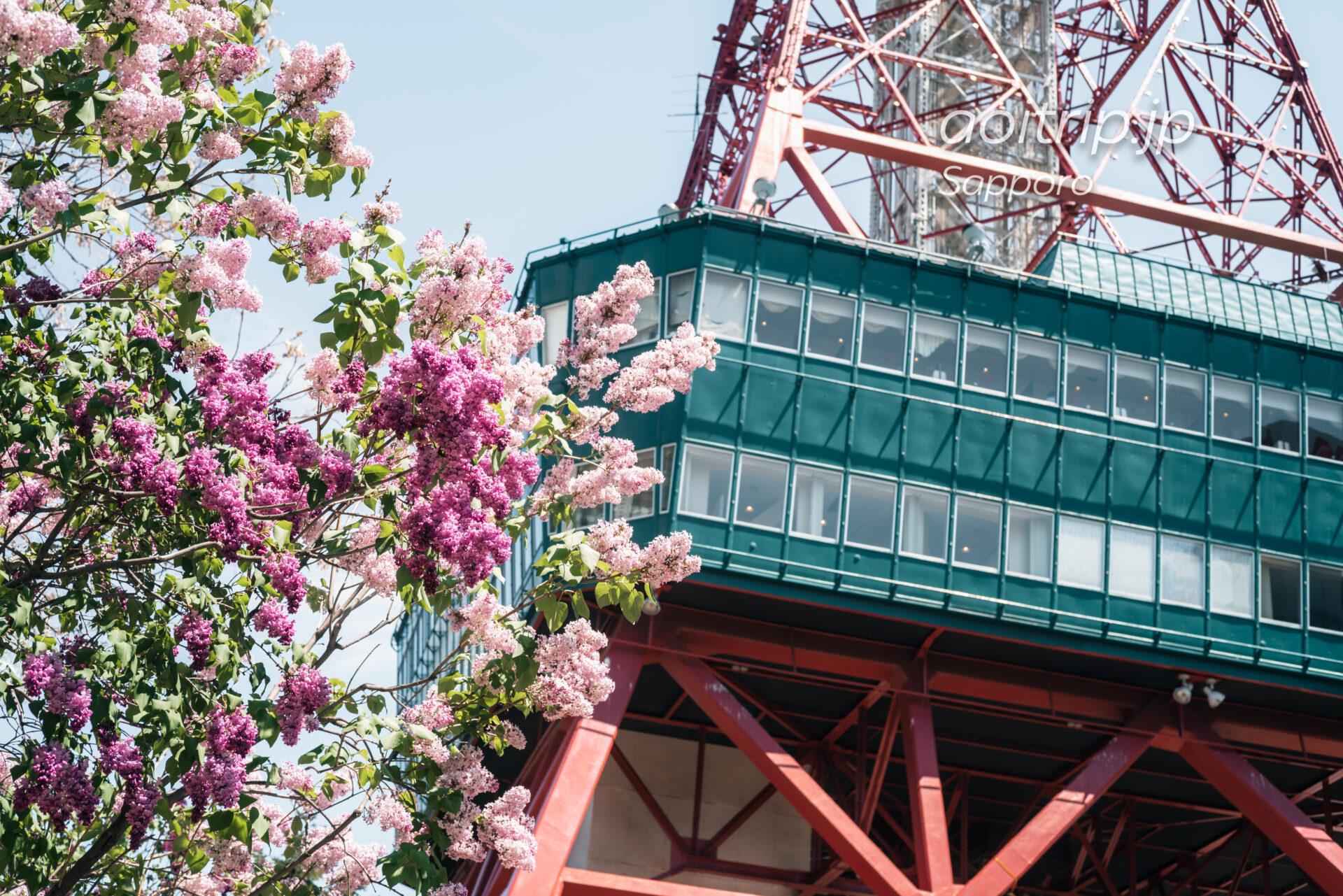 ライラックとさっぽろテレビ塔