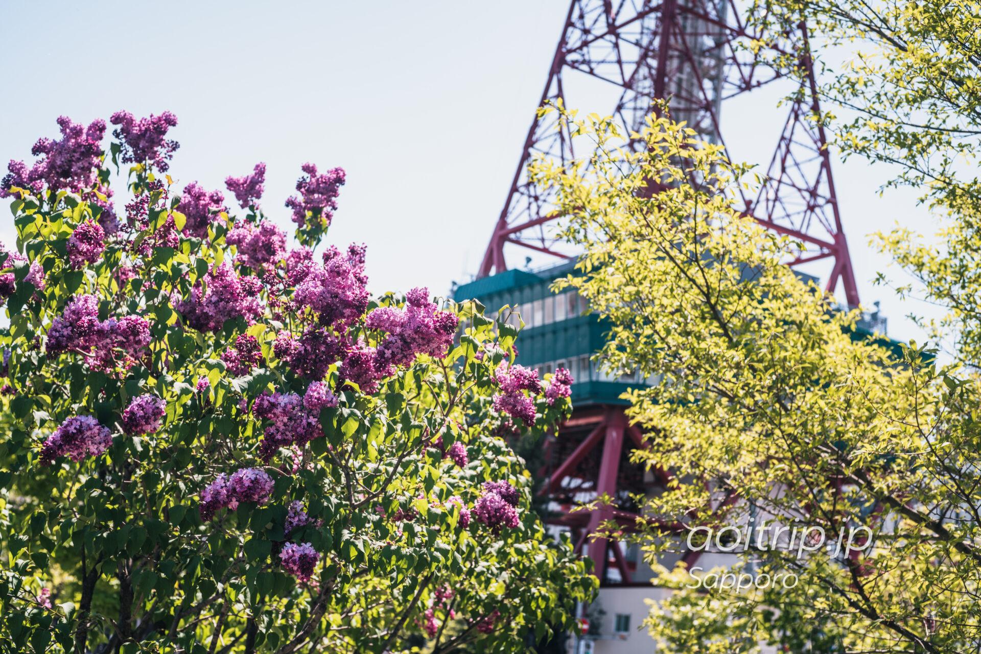 創成川公園のライラックとさっぽろテレビ塔