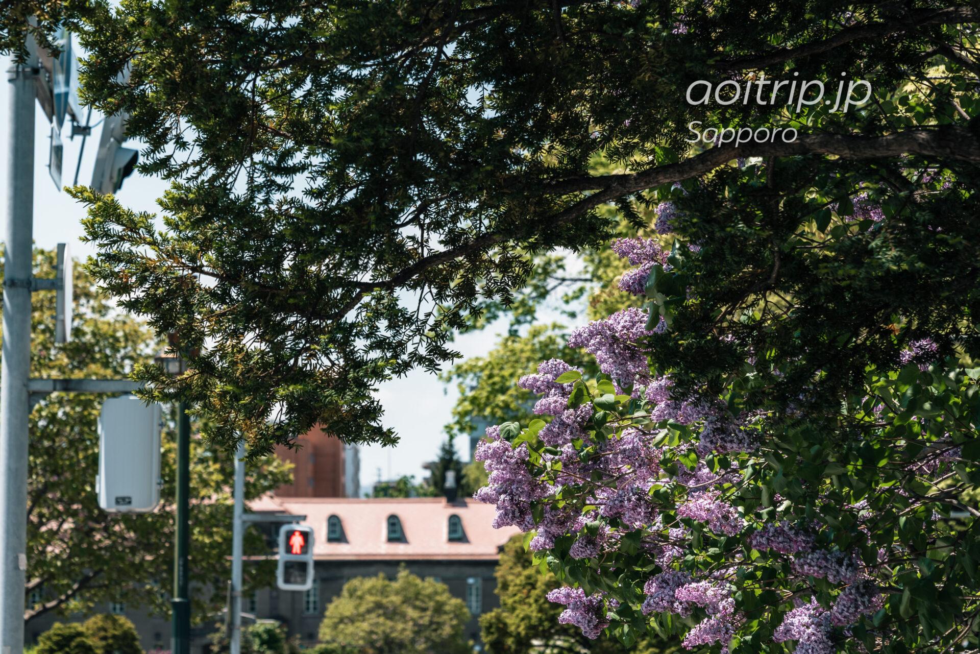 札幌市資料館とライラックの花