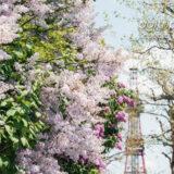 さっぽろテレビ塔と大通公園のライラック