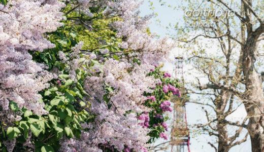 札幌大通公園の春 桜、木蓮、ライラック