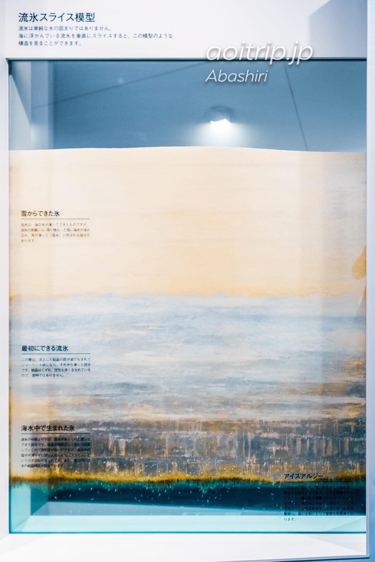 網走のオホーツク流氷館 Okhotsk Ryu-hyo Museum 流氷スライス模型