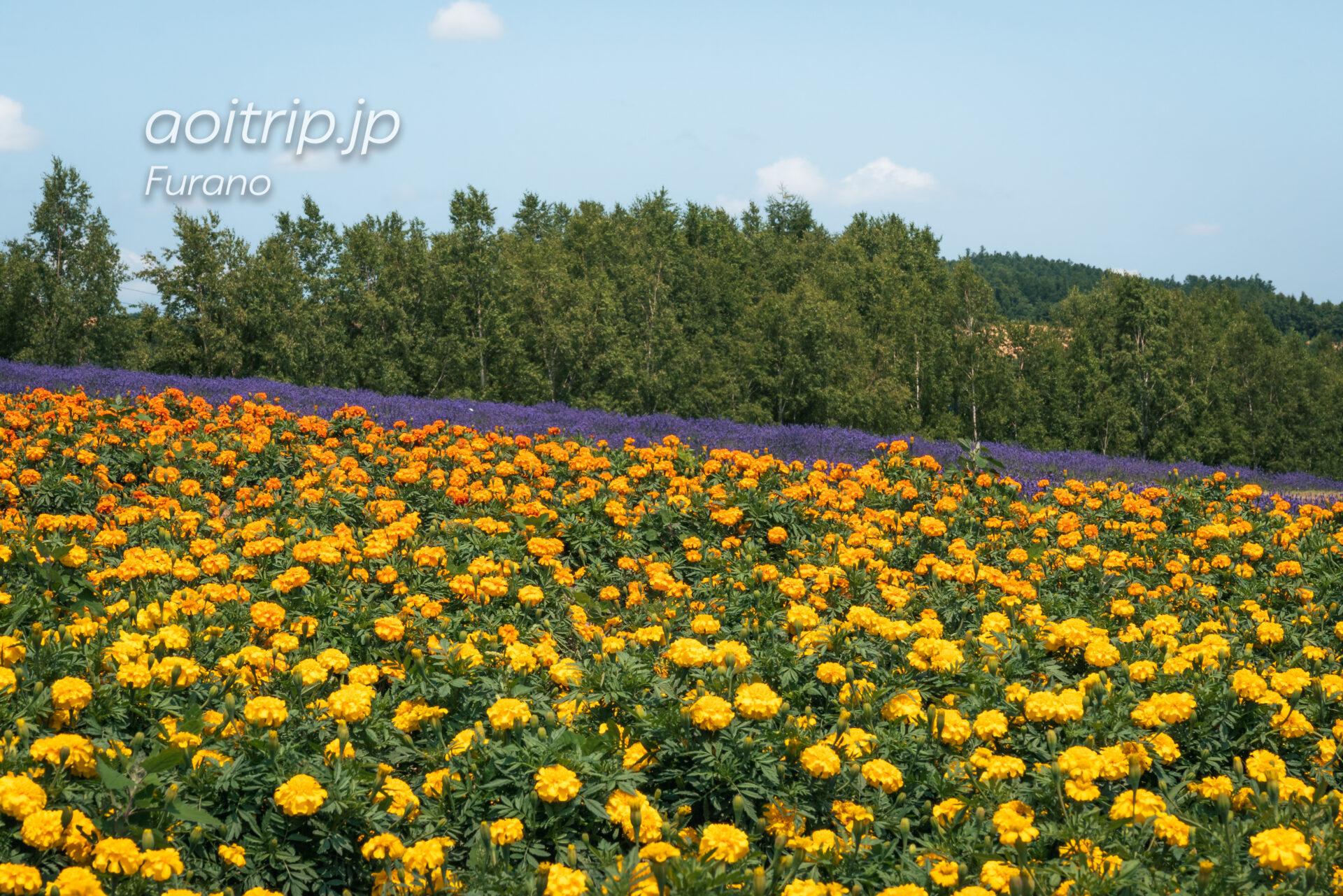 フラワーランドかみふらの Flowerland Kamifurano ラベンダー
