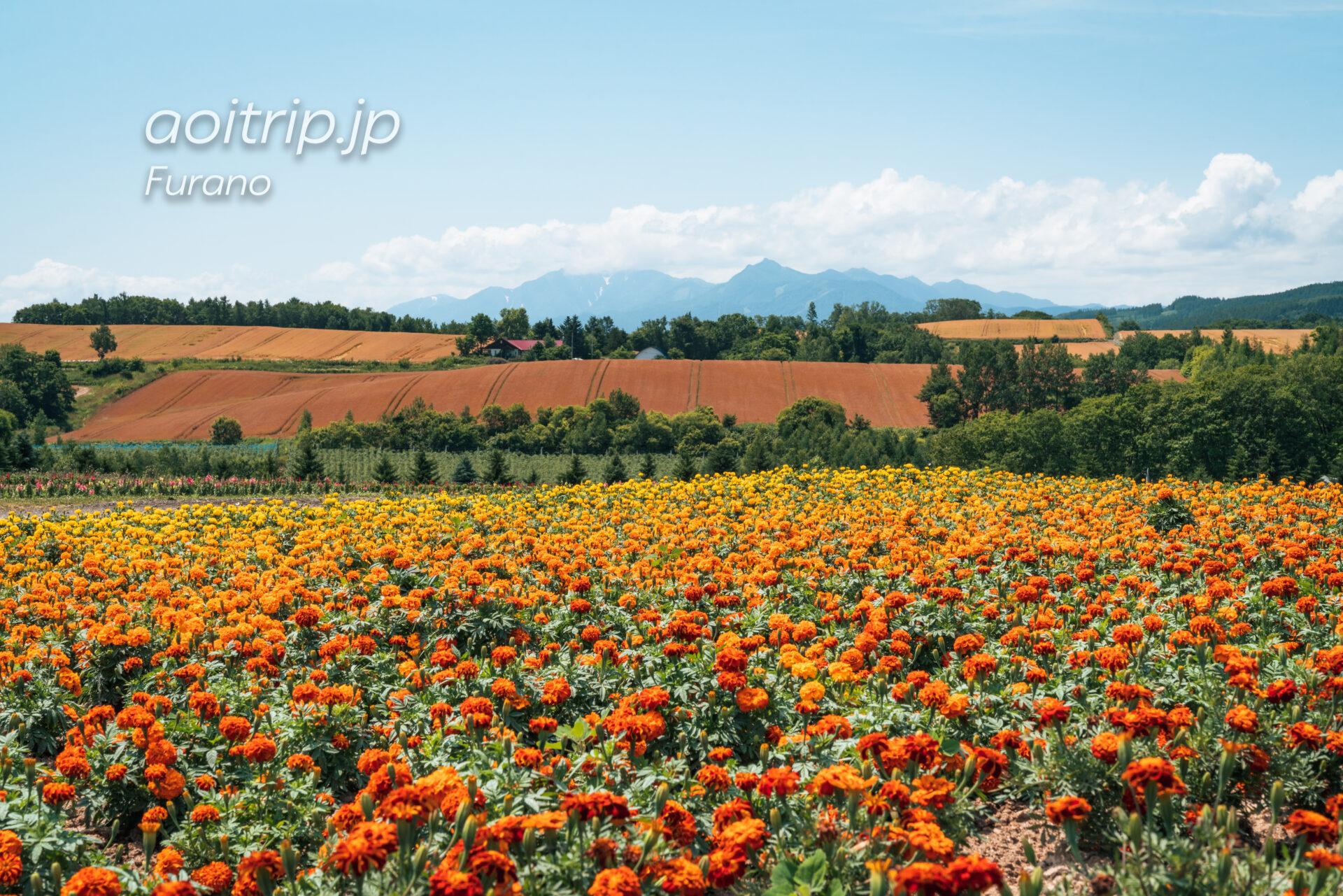 フラワーランドかみふらの Flowerland Kamifurano