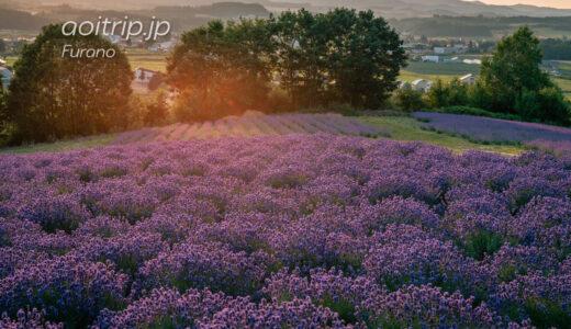 上富良野 日の出ラベンダー園|Hinode Lavender Garden, Kamifurano