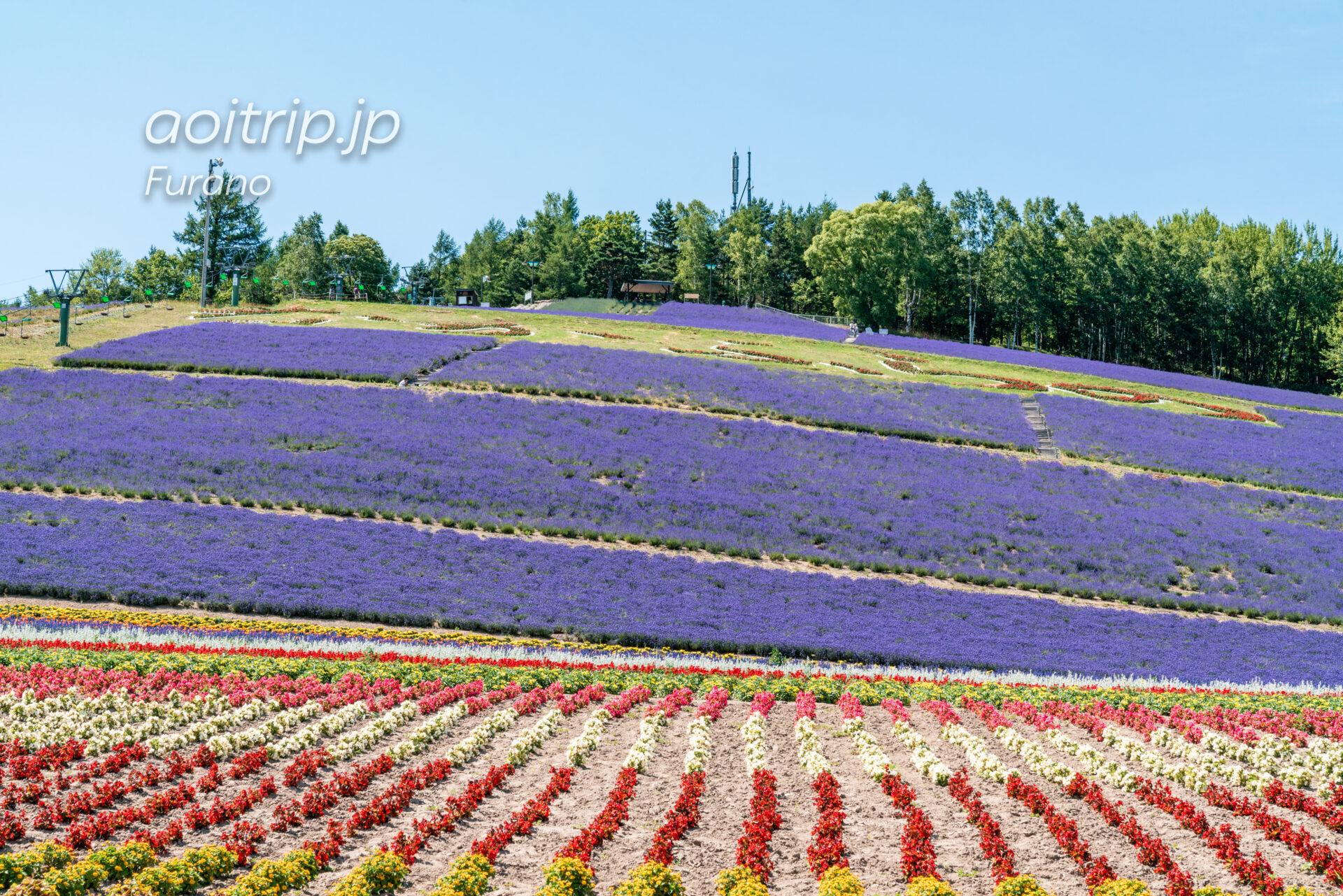 中富良野町営ラベンダー園(北星山)|Choei Lavender Farm, Nakafurano