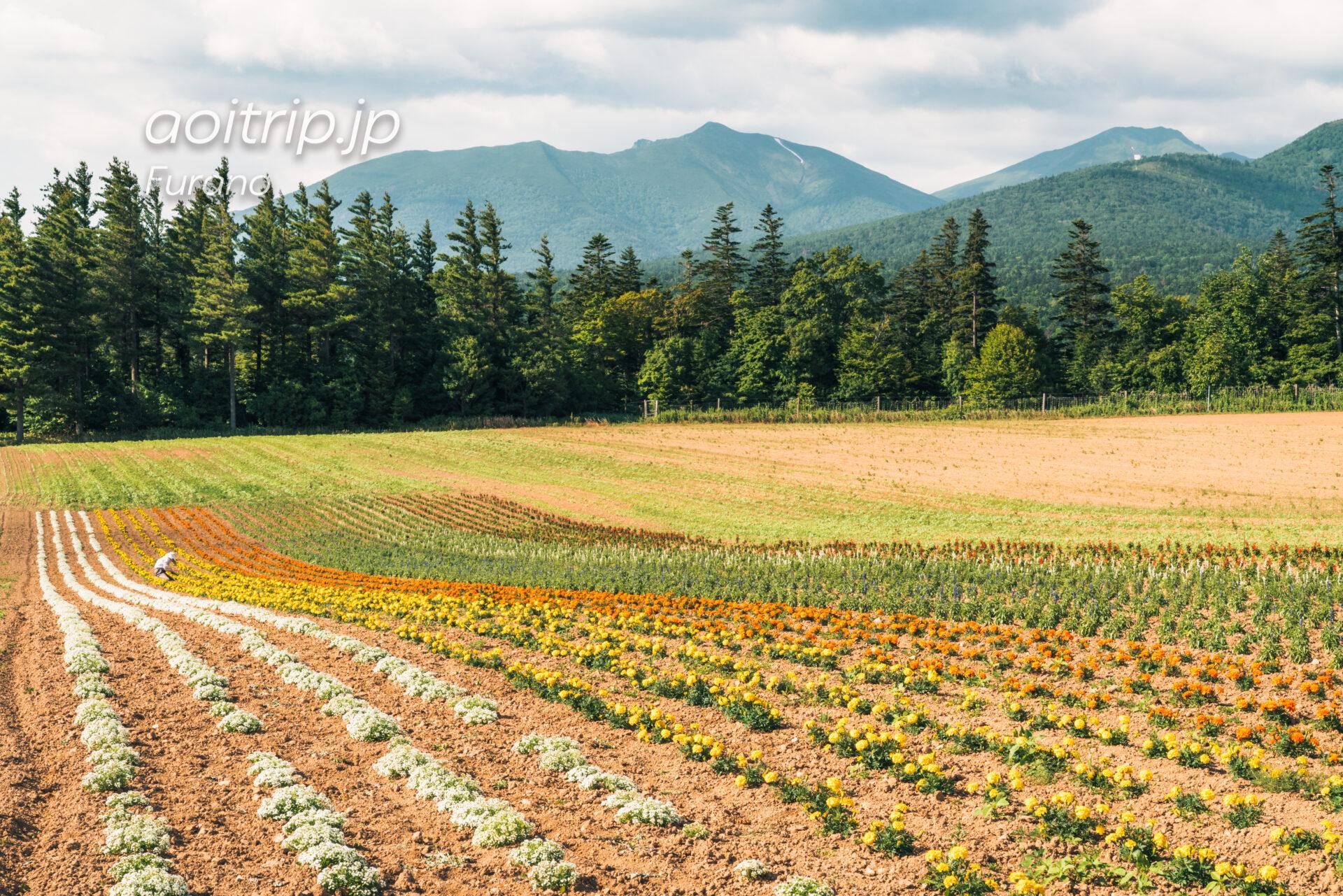 麓郷展望台のレインボーロード(花畑)