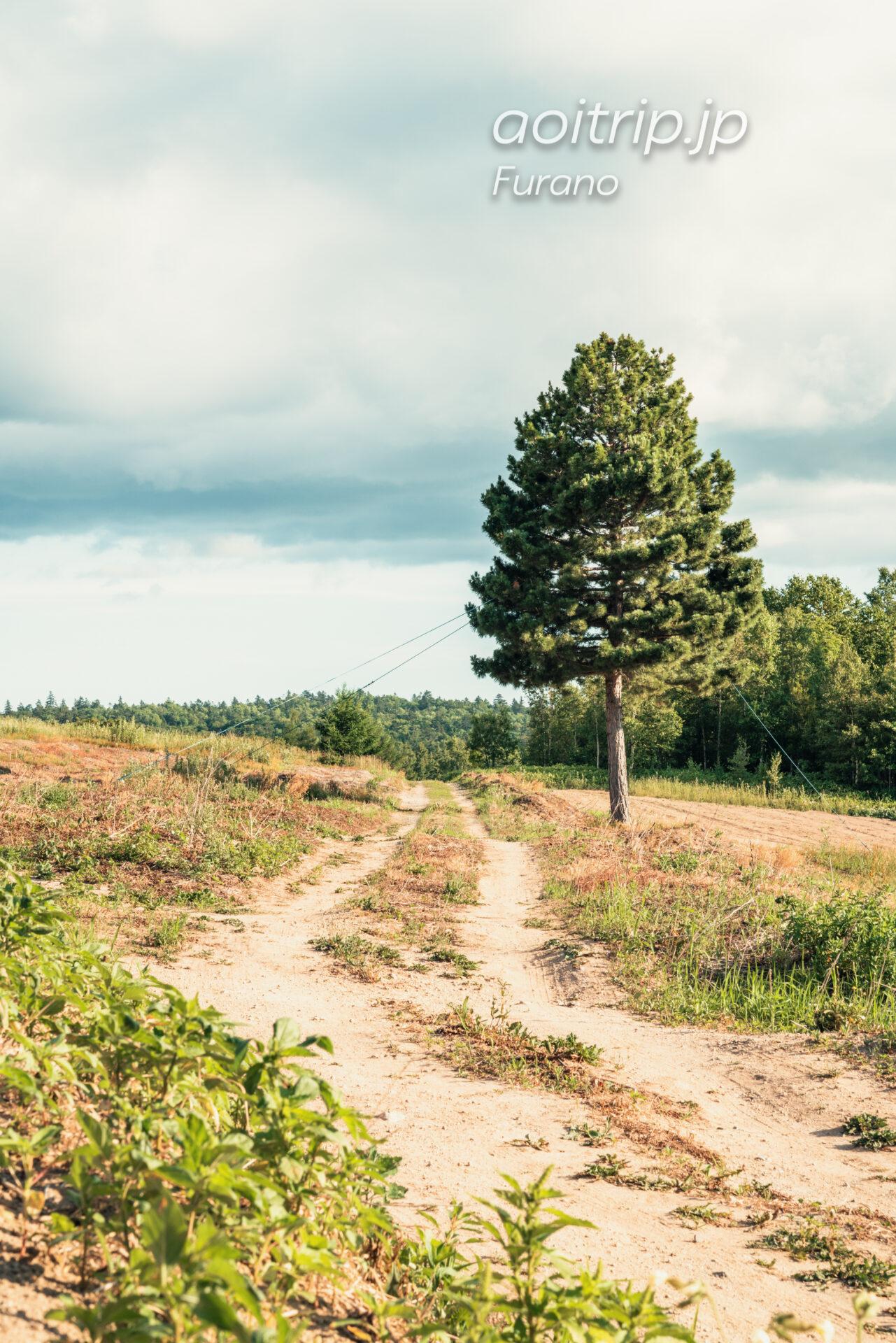 『北の国から』ロケ地巡り 開拓の木