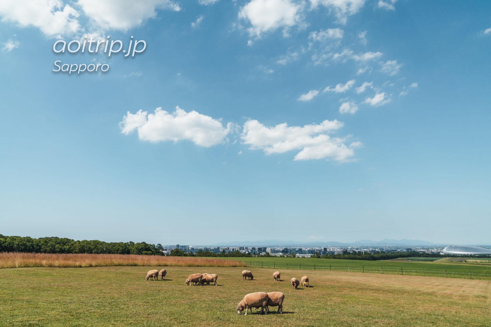 さっぽろ羊ヶ丘展望台 羊の群れ