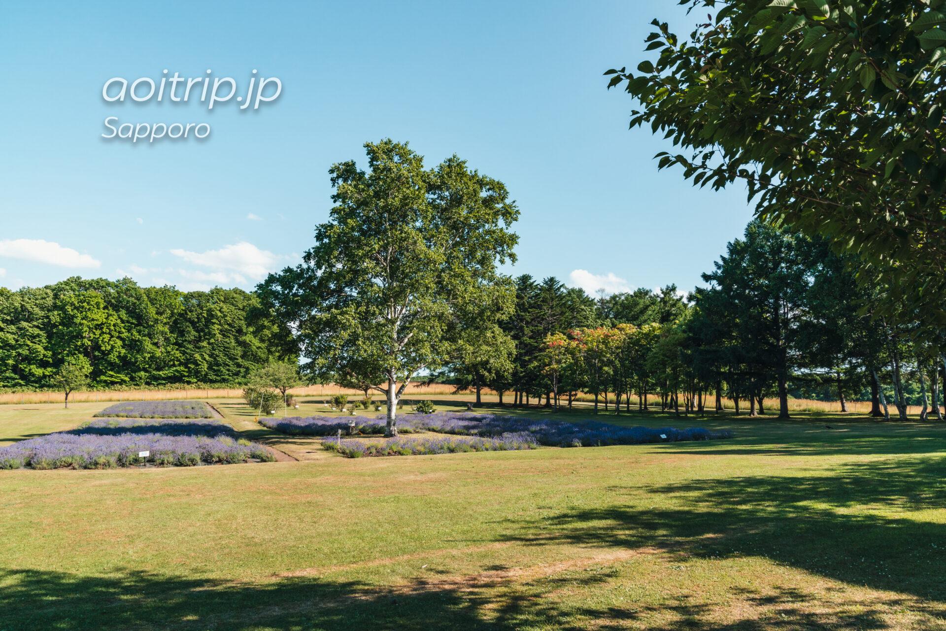 さっぽろ羊ヶ丘展望台 7月のラベンダー畑
