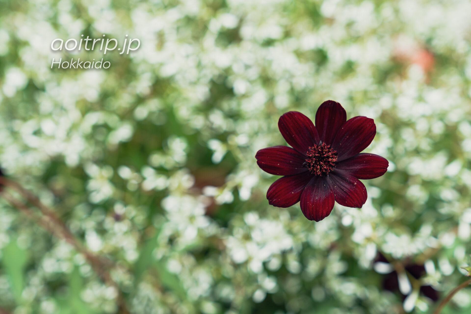 えこりん村 銀河庭園のブラック&ホワイトガーデン