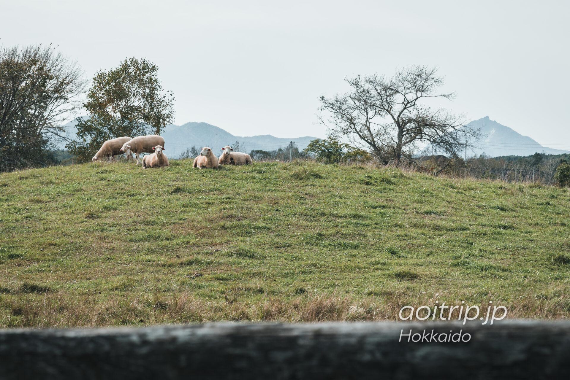 えこりん村の羊と恵庭岳