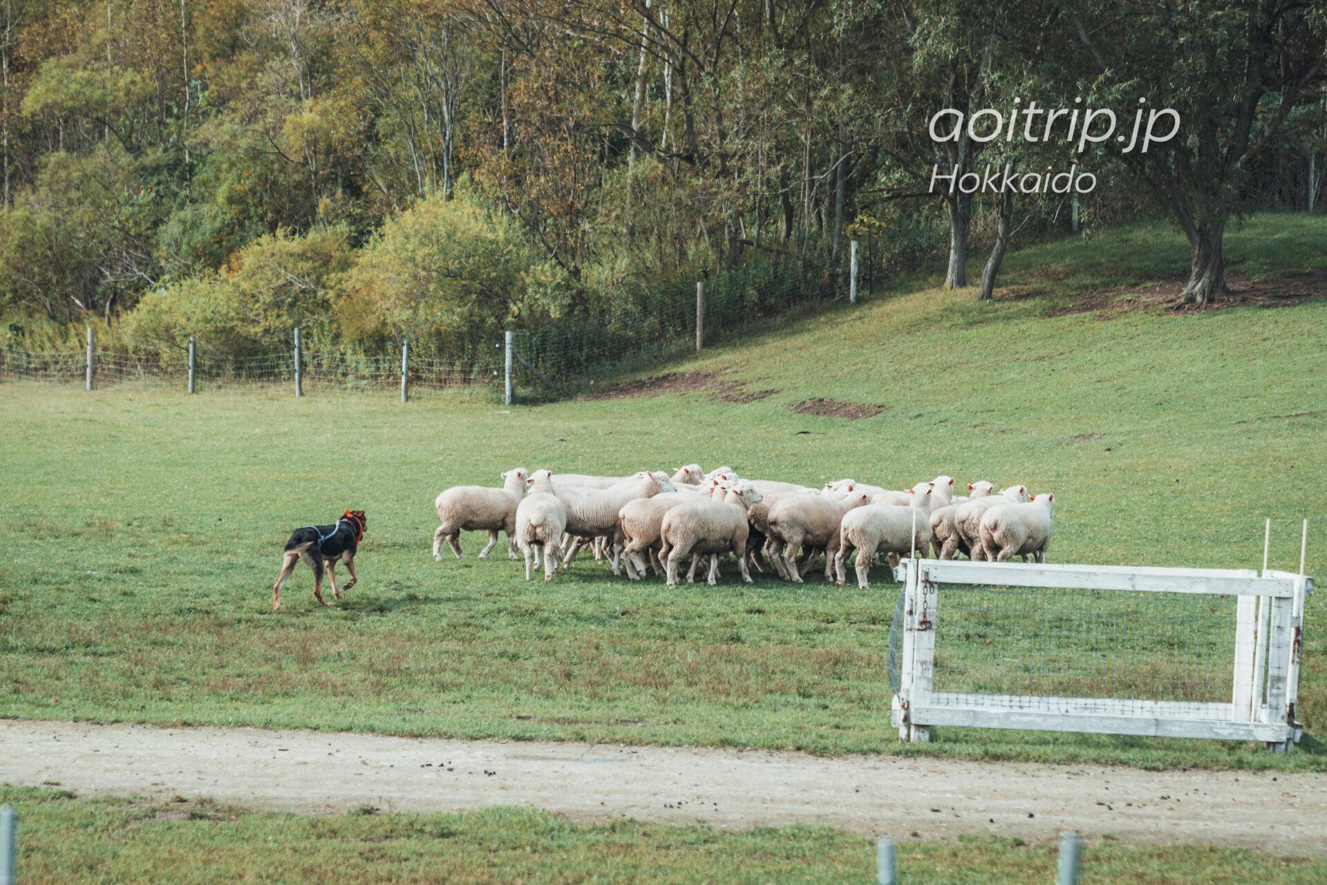 えこりん村 Ecorin Village みどりの牧場 牧羊犬ショー